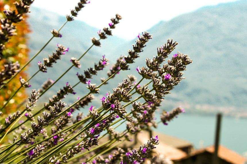 Lago_di_Como_1