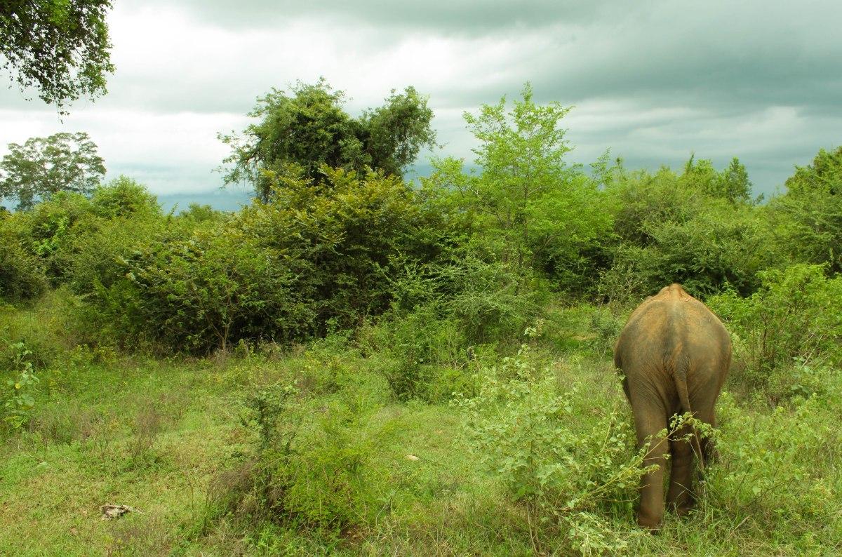 Nature wonders in SriLanka